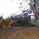 A tree falls 2